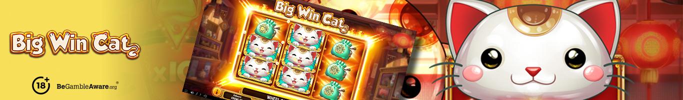 Big Win Cat Banner